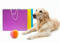 Top Toys For Blind Dogs