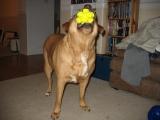 Sprong Hexagon Dog Toy